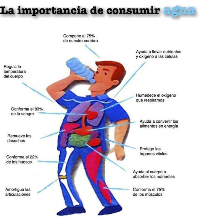 Importancia-de-la-hidratación-para-nuestro-organismo-3